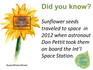 Sunflower seeds traveled to space in 2012 when astronaut Don Petti took them on board the Int'l Space Station - Year of the Sunflower - National Garden Bureau