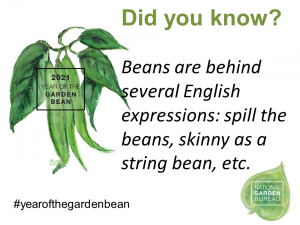 Beans are behind several English expressions: spill the beans, skinny as a string bean, etc. - Year of the Garden Bean - National Garden Bureau
