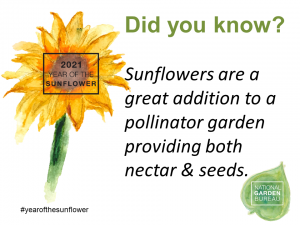 Sunflowers are a great addition to a pollinator garden providing both nectar & seeds - Year of the Sunflower - National Garden Bureau