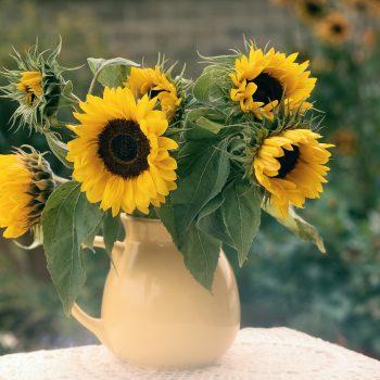 Holiday from Benary - Year of the Sunflower - National Garden Bureau
