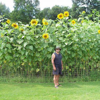 Mammoth from Garden Trends - Year of the Sunflower - National Garden Bureau