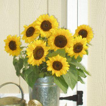 Pro Cut Orange from Garden Trends - Year of the Sunflower - National Garden Bureau