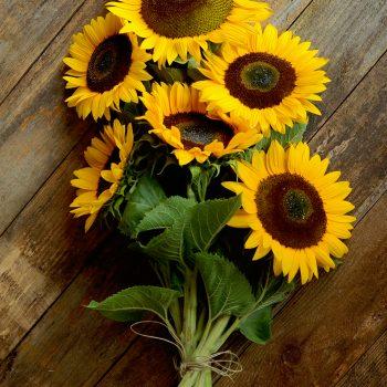 Sunrich Orange Summer from Territorial Seed Company - Year of the Sunflower - National Garden Bureau