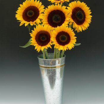 Sunrich Orange from Garden Trends - Year of the Sunflower - National Garden Bureau