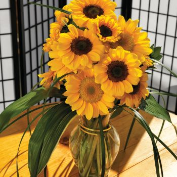 Vincent Choice and Vincent Fresh from Sakata - Year of the Sunflower - National Garden Bureau