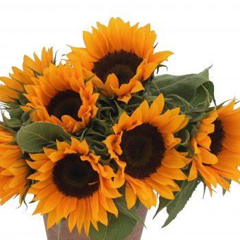 Zohar from Garden Trends - Year of the Sunflower - National Garden Bureau
