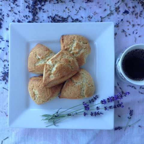 Easy to Make Lavender Scone - Year of the Lavender - National Garden Bureau