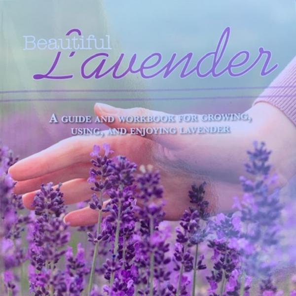 Beautiful Lavender - Using Lavender from your garden - National Garden Bureau - Holiday Gardening Gifts