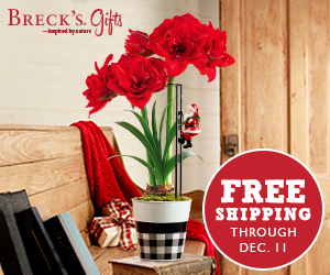 Amaryllis Lovers - Breck's Ad