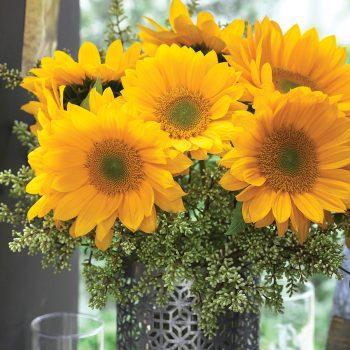Sunrich Gold Summer from Takii - Year of the Sunflower - National Garden Bureau