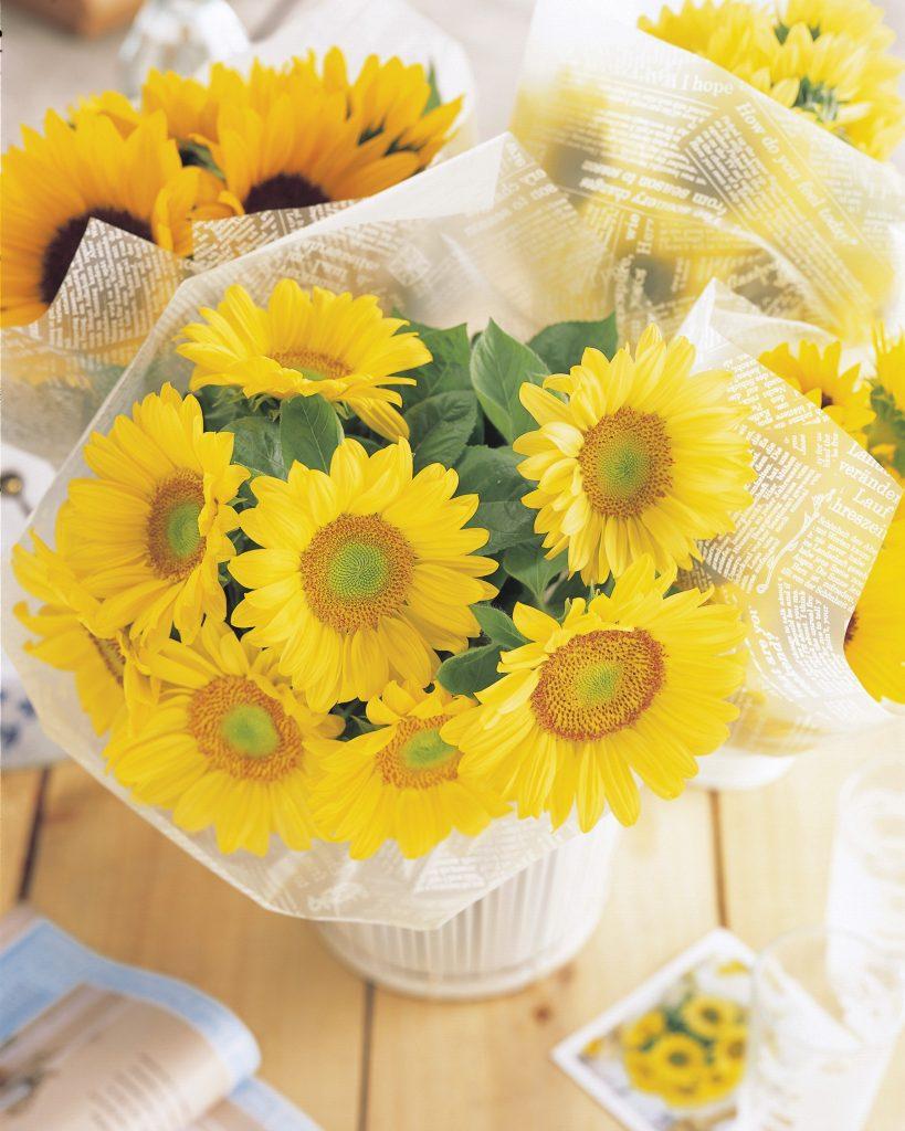 Sunrich Lime from Takii - Year of the Sunflower - National Garden Bureau