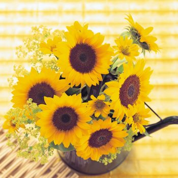 Sunrich Orange from Takii - Year of the Sunflower - National Garden Bureau