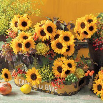 Sunrich Provence Summer from Takii - Year of the Sunflower - National Garden Bureau