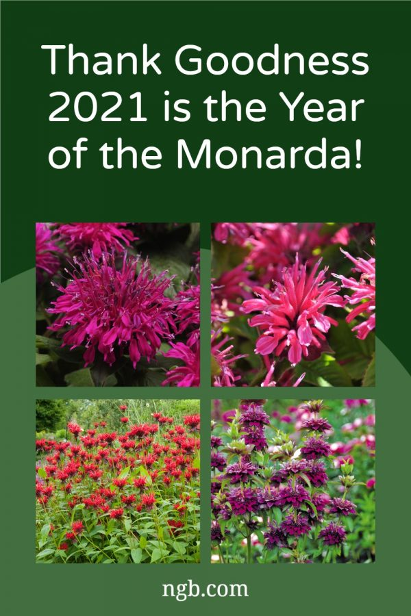 Thank Goodness 2021 is the Year of the Monarda - #YearoftheMonarda - National Garden Bureau