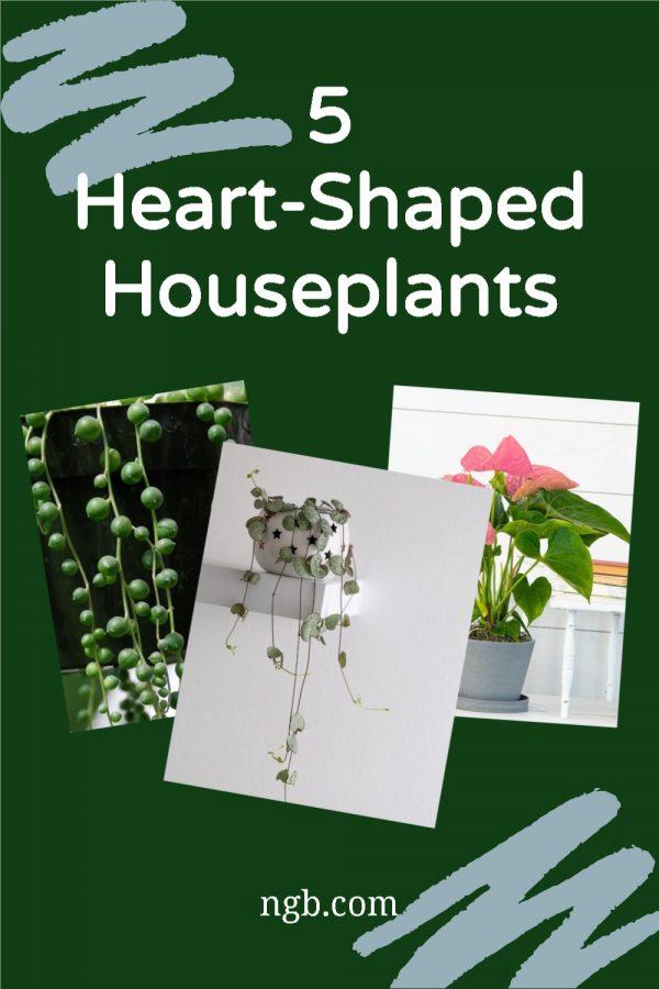5 Heart-Shaped Houseplants for someone special - National Garden Bureau