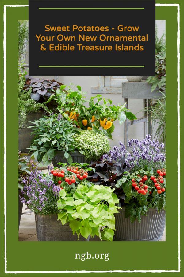 Sweet Potatoes - Grow Your Own New Ornamental & Edible Treasure Island Varieties - National Garden Bureau