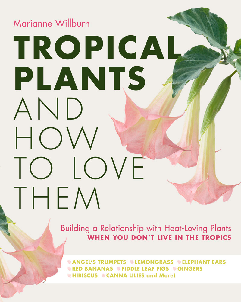 Tropical Plants and How to Love Them - National Garden Bureau