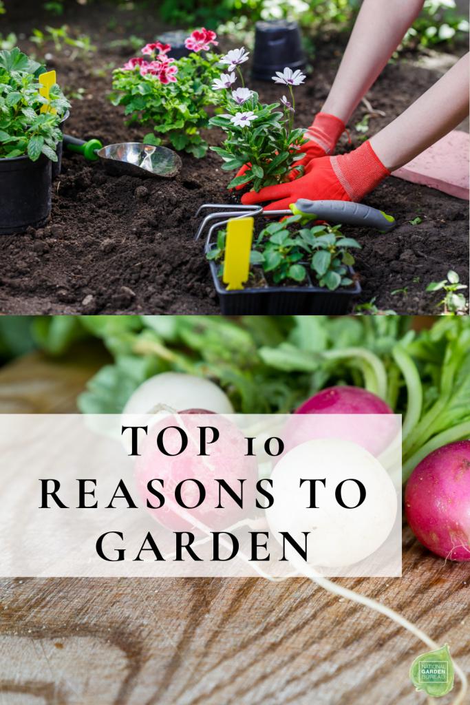 Top 10 reasons to garden