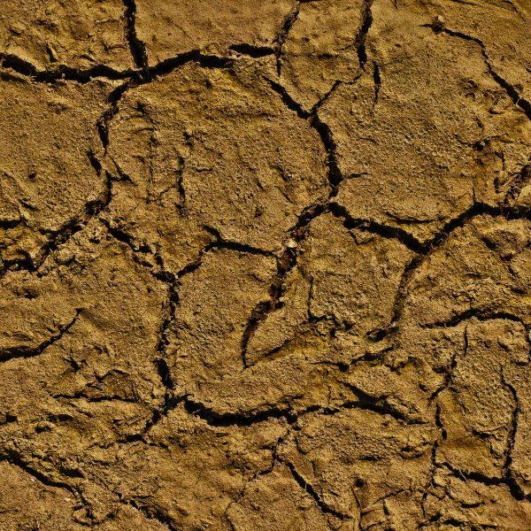 Dry clay - soil basics - National Garden Bureau