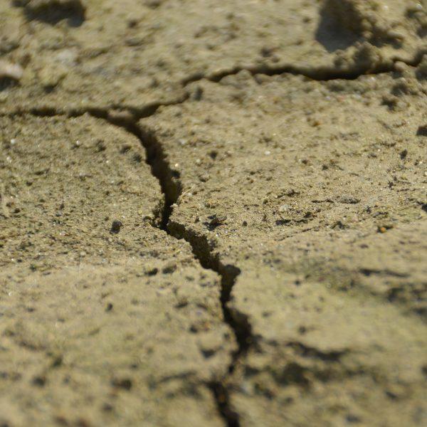 Sandy Soil - Soil Basics - National Garden Bureau