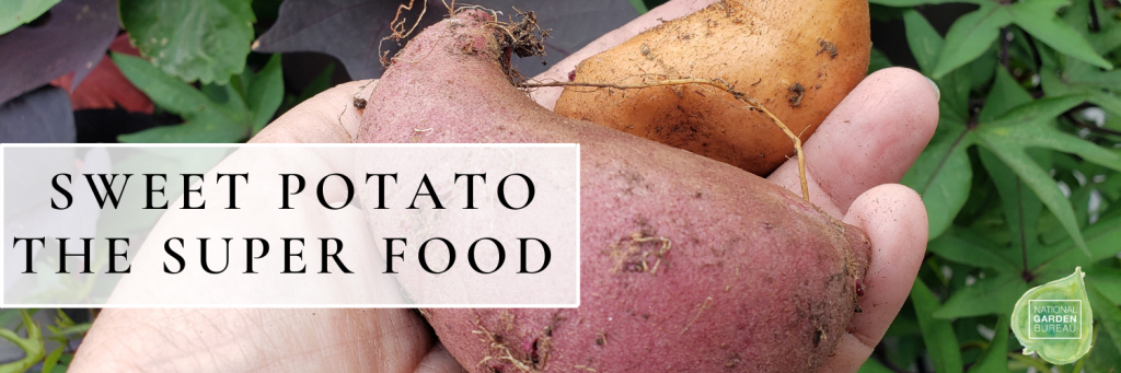 Sweet Potato The Super Food - National Garden Bureau