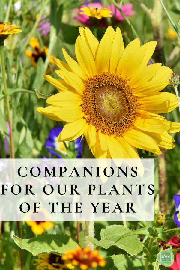Companion Plants for our NGB Plants of the Year! - National Garden Bureau