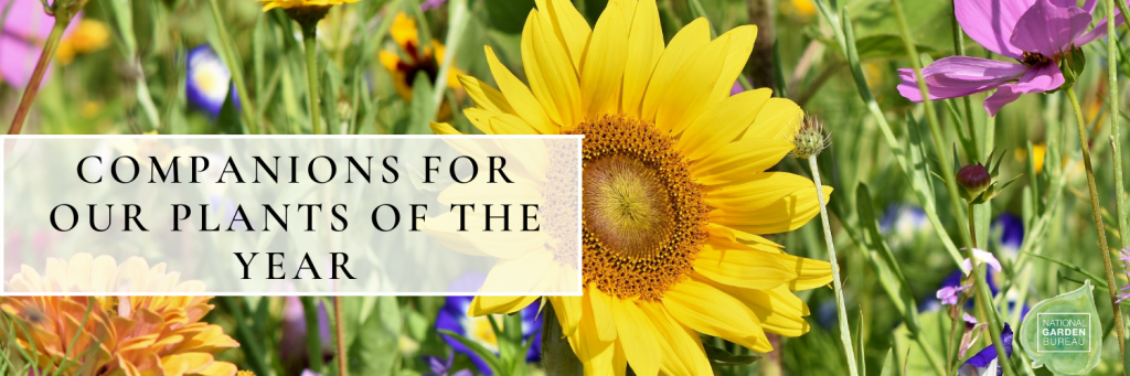 Companions for NGB's Plants of the Year - National Garden Bureau