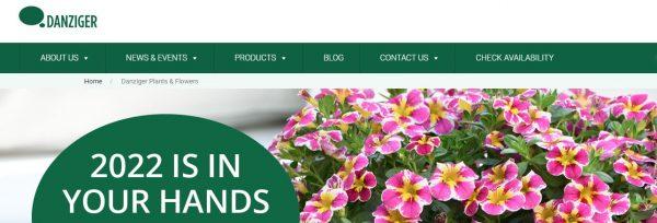 Danziger website