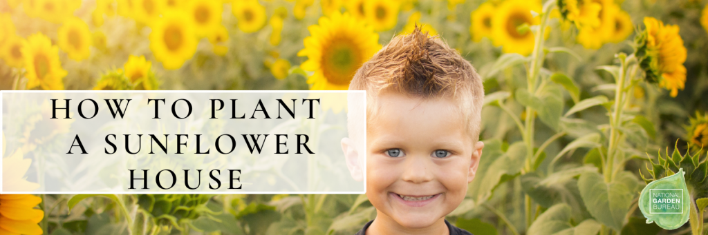 How to plant a sunflower house - National Garden Bureau