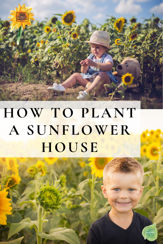 How to plant a Sunflower House - 8 easy steps to do with your kids - National Garden Bureau
