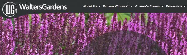 Walters website