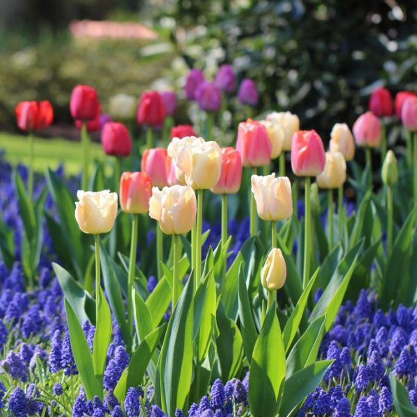 Curb Appeal with repeat of color - National Garden Bureau