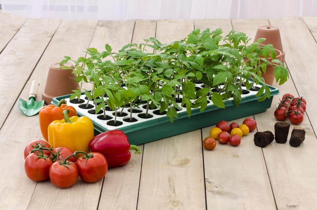 Gurney's Seed Starting Kit- National Garden Bureau Member