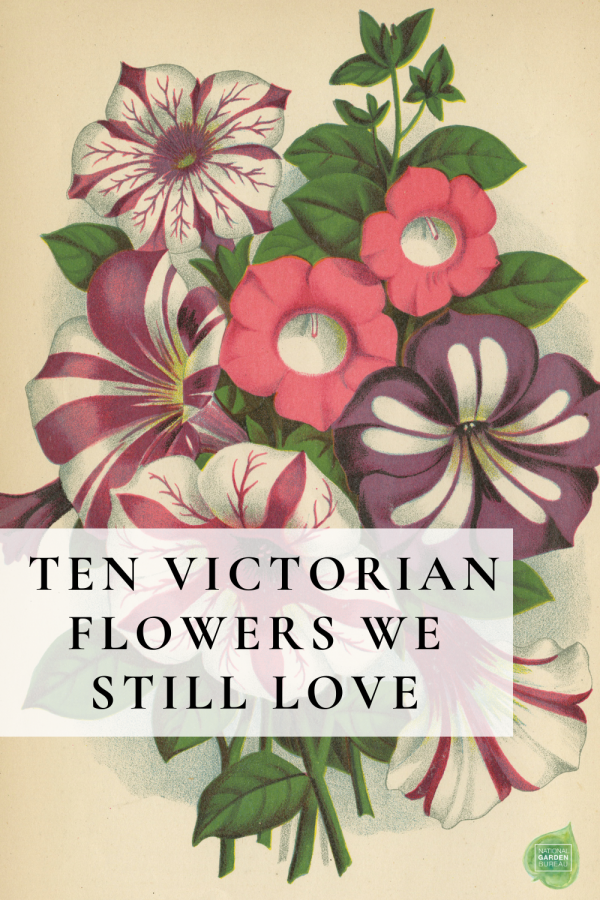 Ten Victorian Flowers We Still Love and Grow Today! - National Garden Bureau