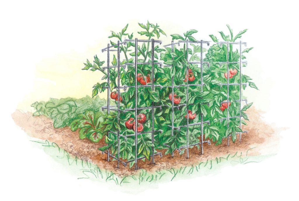 Tomato Cage - Plant Trellis - Gurney's National Garden Bureau Member