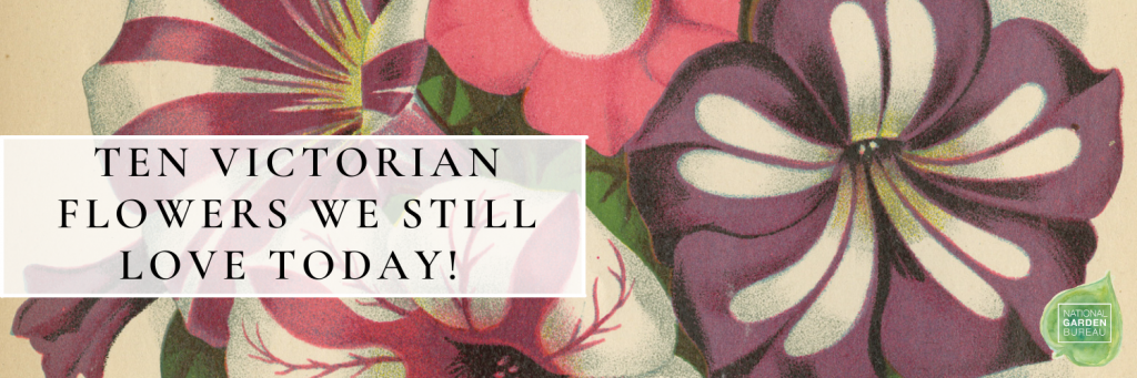Ten Victorian Flowers We still love today - National Garden Bureau