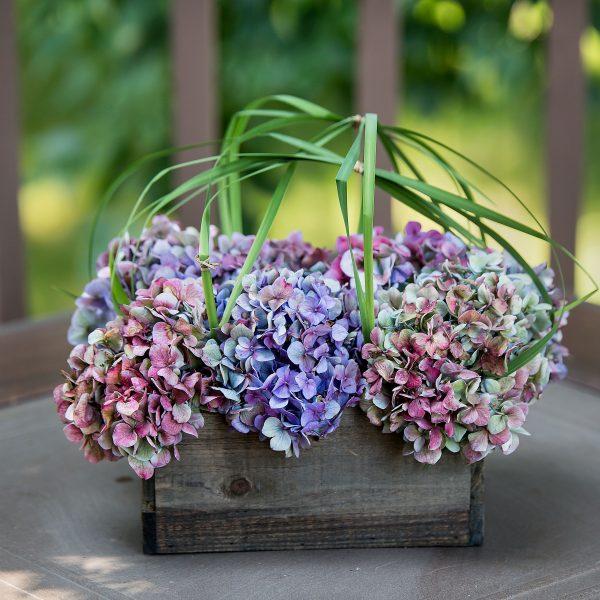 Endless Summer Hydrangea makes beautiful cut flower designs - National Garden Bureau