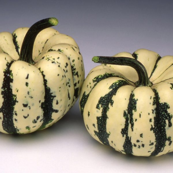 Sweet Dumpling Squash is perfect for use on a squash tunnel for kids hideaways