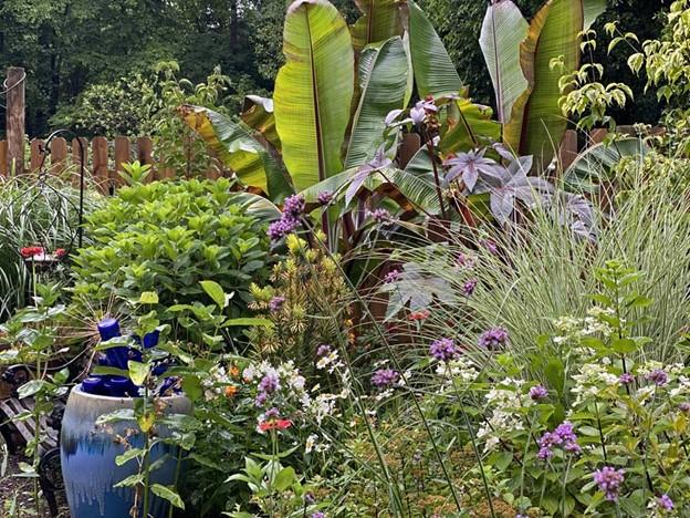 Tropical Plants give your garden a tropical twist - National Garden Bureau