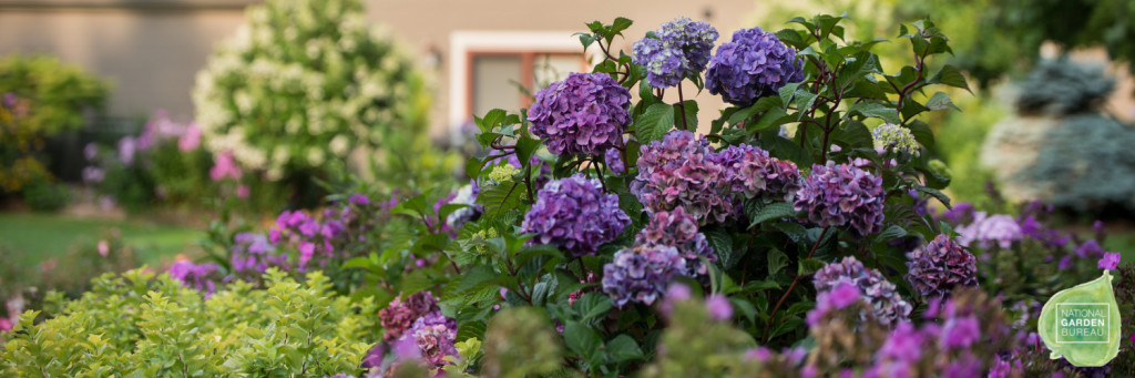 Shrubs for Cutting Gardens: Roses, Hydrangeas, and Other Long-Lasting Flowers - National Garden Bureau