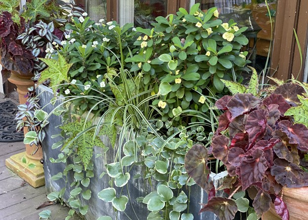 Tropical plants create beautiful and unusual combinations in containers - National Garden Bureau