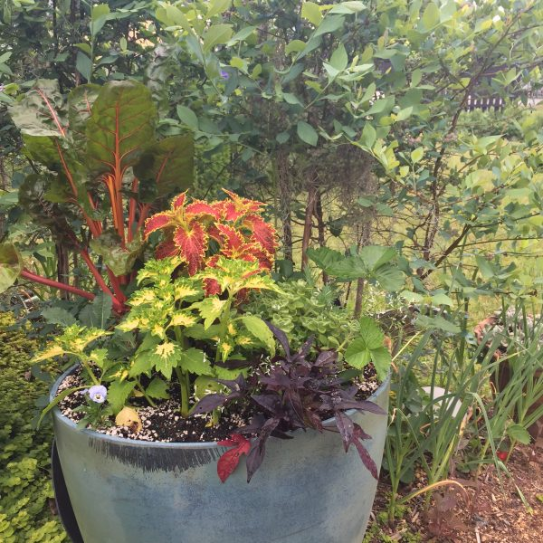 Foodscape in Containers is a great way to maximize beauty and bounty throughout the growing season. - National Garden Bureau