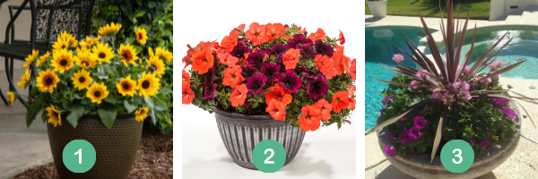 Create your own summer sun containers, it's as easy as 1,2,3 - National Garden Bureau