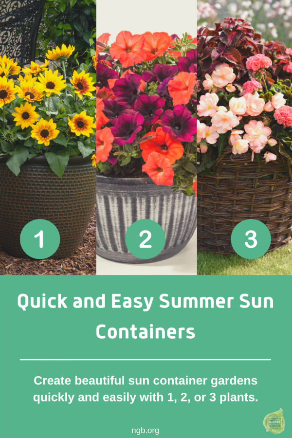 Create your own summer sun containers, it's as easy with 1,2, or 3 plants- National Garden Bureau