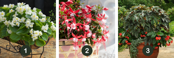 Summer Shade Containers are as easy as 1 plant-2 plants-3 plants