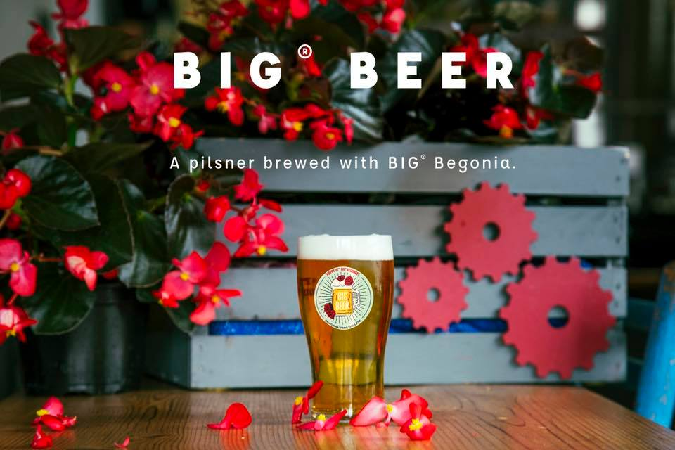 BIG Begonia Beer are perfect for summer garden cocktails