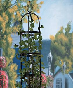 Edmunds Roses Vertical Interest & Support