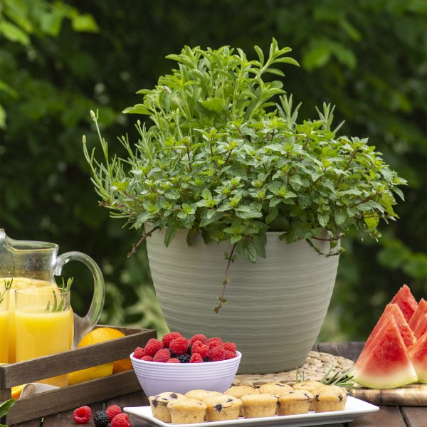 Herb-A-Licious Baking Up A Storm for your container herb garden