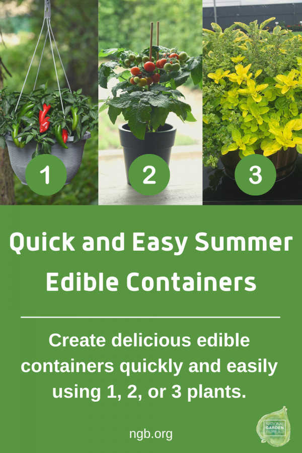 Quick and Easy Summer Edible Containers using 1, 2, or 3 plants