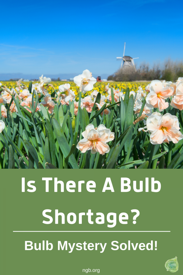 Is There a Bulb Shortage? Bulb Mystery Solved / National Garden Bureau